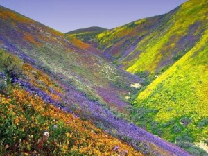 Valley-of-Flowers-2-300x225